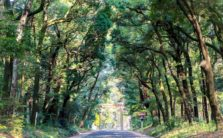 JR東日本さんと東京・山手線の駅を起点に、森ツアーをさせてもらいます。