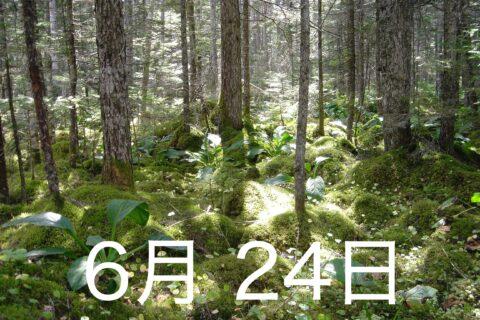 森のサロン
